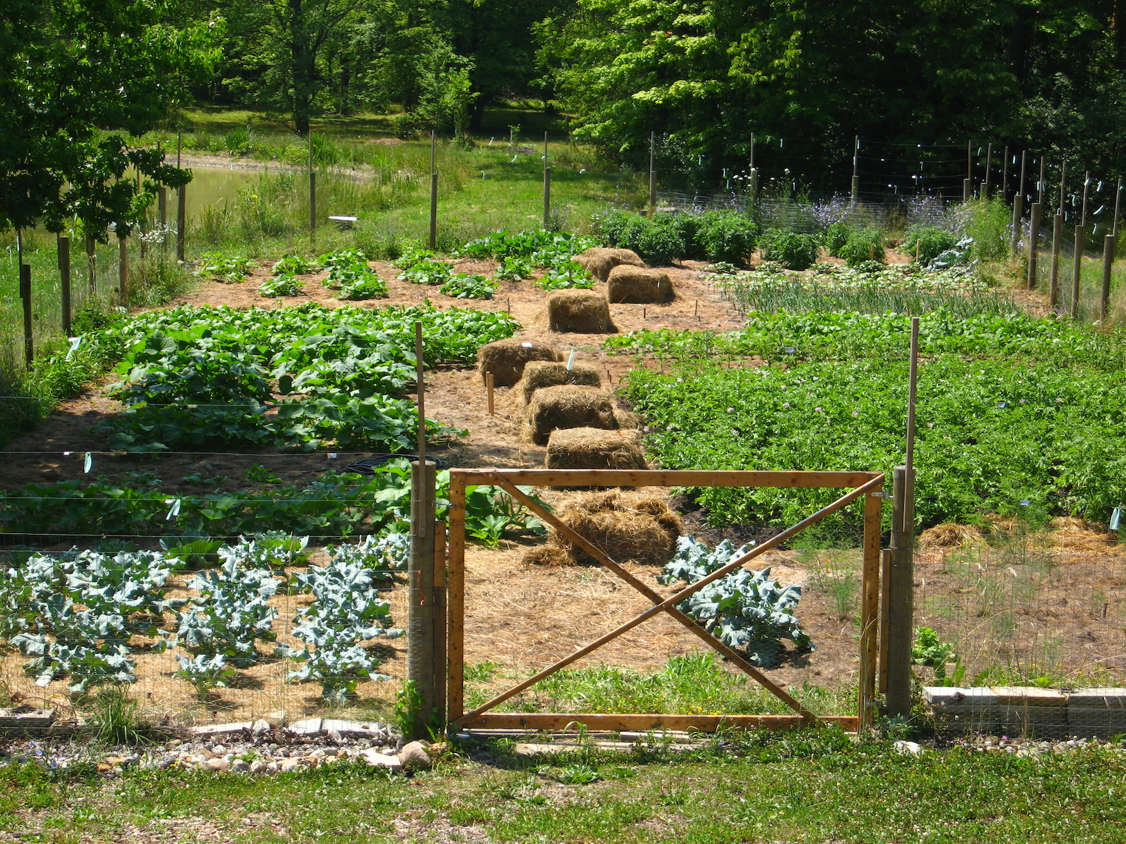 Trail Magic garden in 2012; a positive energy home in Oberlin OH.