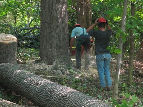 Trail Magic, lumbering on site ash trees for house; a positive energy home in Oberlin, OH.