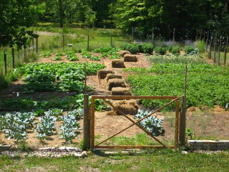 Trail Magic, garden in 2012; a positive energy home in Oberlin, OH.