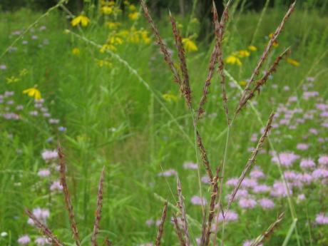 Trail Magic, 5-year-old tall grass prairie; a positive energy home in Oberlin, OH.
